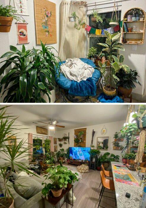 Sala con pared blanca con piso de madera y sillones grises y uno azul con macetas y plantas colgantes
