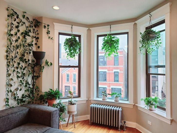 Plantas colgantes en tres ventanas grandes en una habitación blanca con vista a un edificio naranja