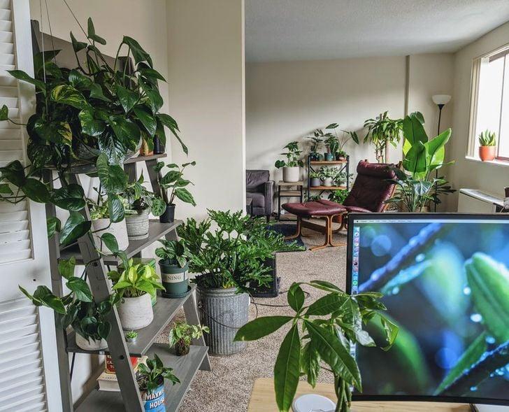 Habitación blanca amplia con estantes llenos de plantas y plantas en el piso