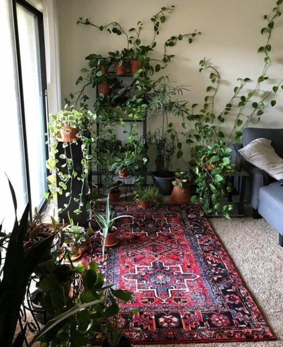 Jardín interior en habitación color beige con alfombra roja con detalles morados