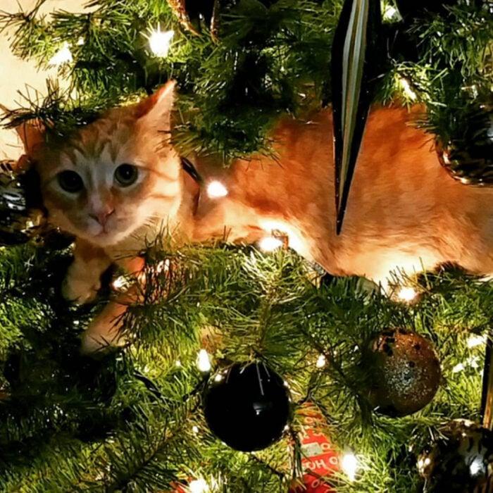 Gatito acostado entre las ramas de un árbol de Navidad