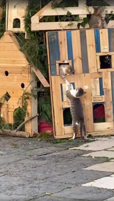 Par de gatitos jugando en el árbol de Navidad de Lucera, Italia