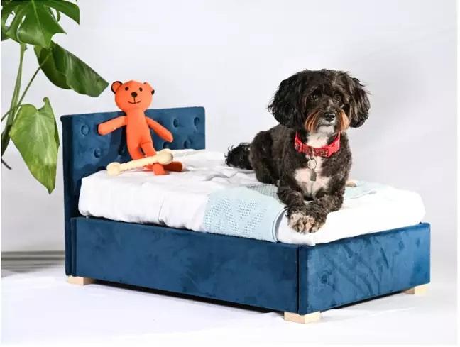 Perro recostado sobre una cama azul miniatura; Ahora tu mascota puede tener una minicama idéntica a la tuya