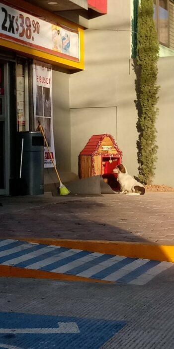 Perrito fuera del OXXO mirando por una puerta de vidrio; Empleados de un OXXO adoptan a perrito callejero y lo llaman Migajón