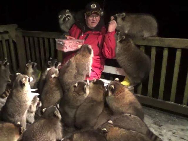 James Blackwood sentado en una banca de madera alimentando mapaches