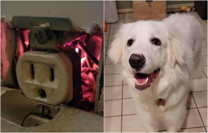 Perrito blanco salvando a su familia de un incendio eléctrico