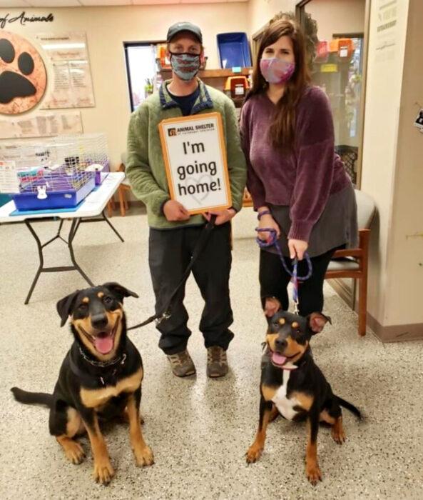 Perros sonriendo; perritos mestizos en el veterinario