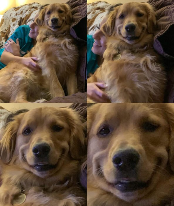 Perros sonriendo; perrito golden retriever color miel sentado en el sillón con su dueña