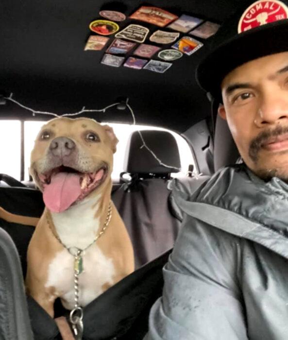 Perros sonriendo; perrito adulto pitbull color café con pecho blanco sentado en el asiento trasero del carro