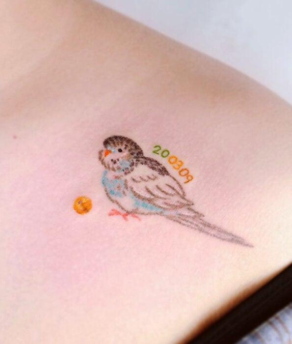 Tatuaje bonito y femenino de ave en la clavícula,pájaro loro de caricatura tierno y kawaii de color azul con café