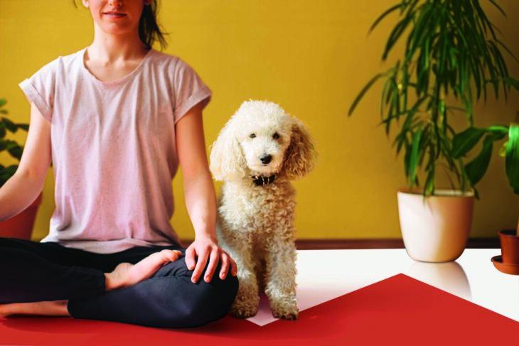 Pared pintada en colores brillantes amarillo anaranjado y blanco con un perro y una mujer haciendo yoga