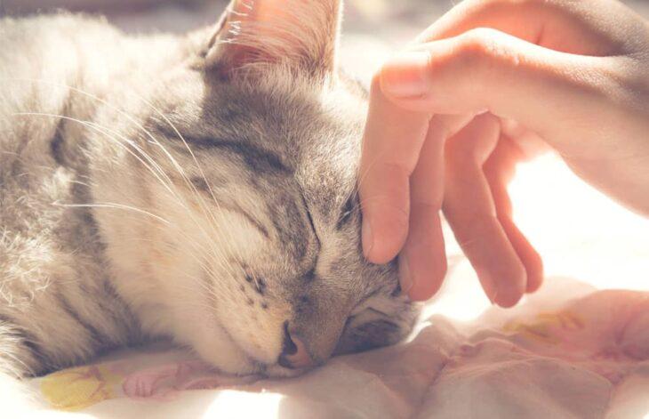 La ciencia lo confirma: tu gatito siente que eres su mamá y es miaudorable