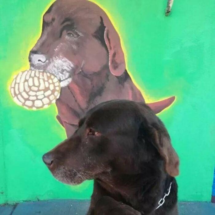 """Perrito """"El conchas"""" y su mural"""