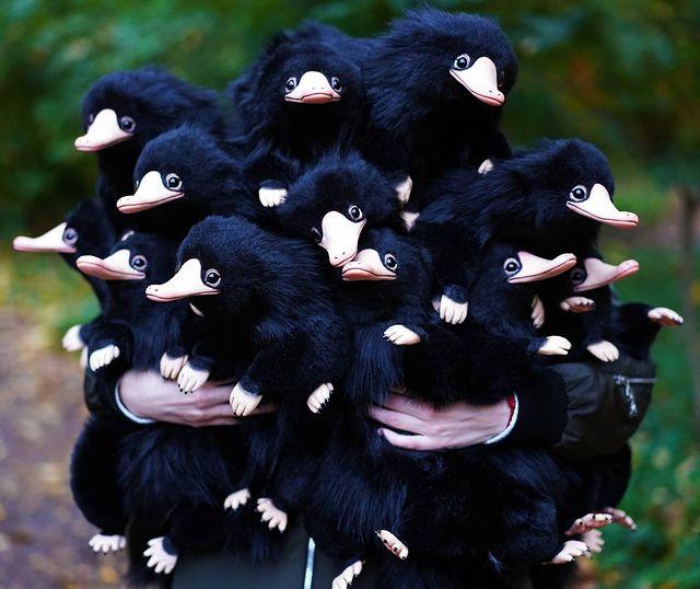 Peluches negros de ornitorrincos