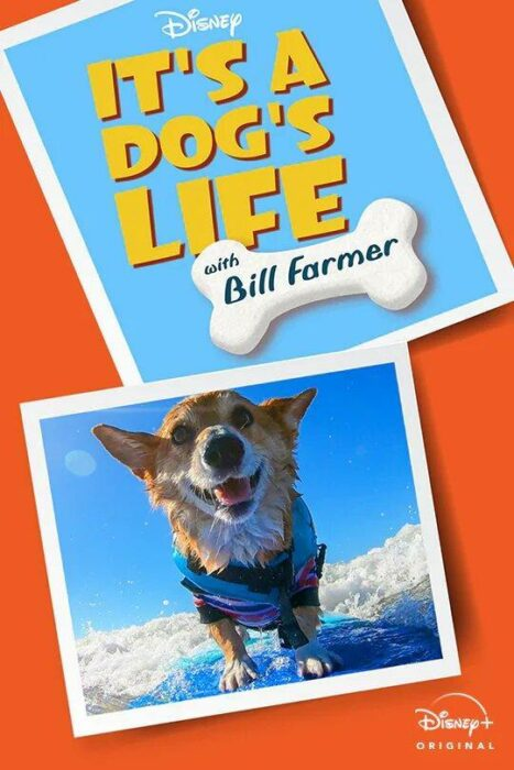 Poster de 'Una Vida de Perros con Bill Farmer'