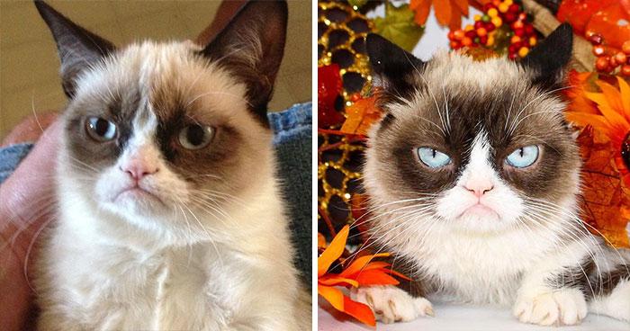 Antes y después del gatito protagonista del meme Grumpy Cat