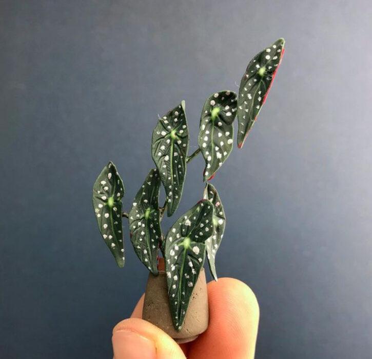 Begonia Maculata en miniatura, hecha por Astrid Wilk