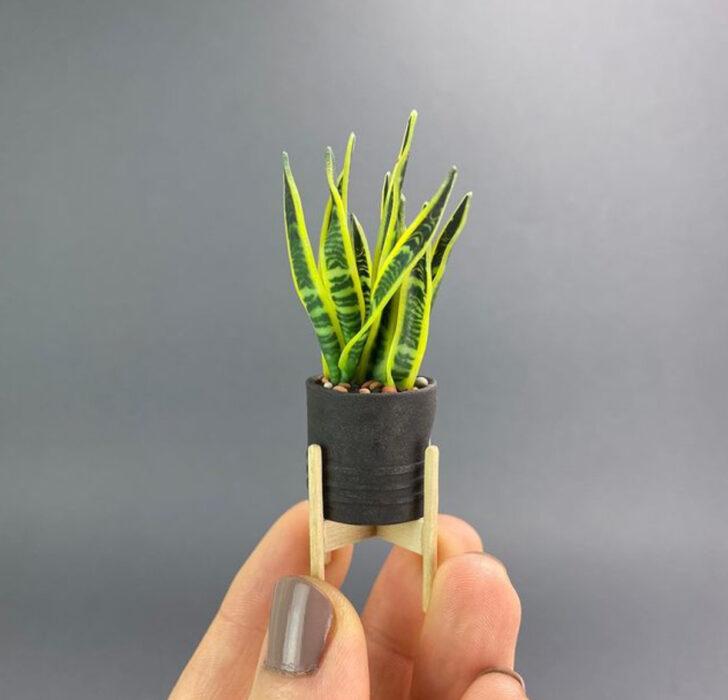 Sansevieria en miniatura, hecha por Astrid Wilk