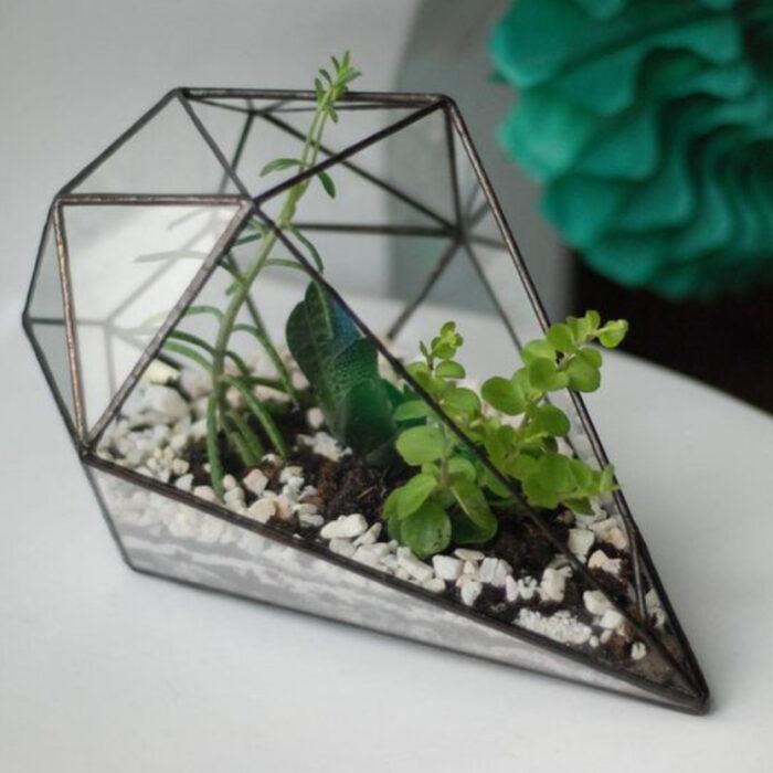 Terrario en pecera en forma de diamante con diferentes plantitas