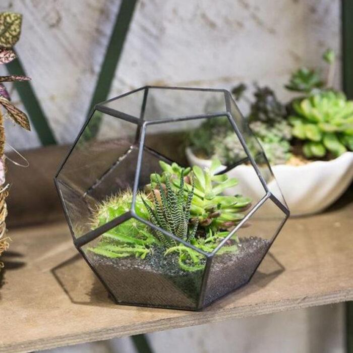 Terrario en pecera en forma dehexágono con suculentas dentro