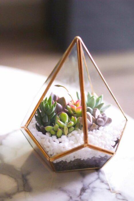 Terrario en pecera con forma de pirámide