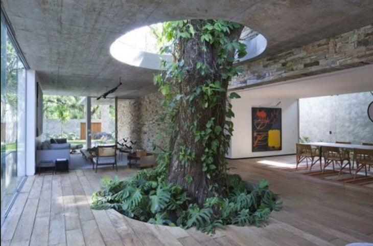 árbol atravesando la sala de una casa; 12 Pruebas de que la naturaleza puede ser la mejor amiga de la arquitectura
