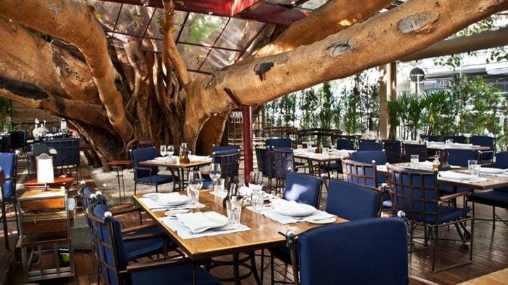 árbol atravesando un restaurante; 12 Pruebas de que la naturaleza puede ser la mejor amiga de la arquitectura