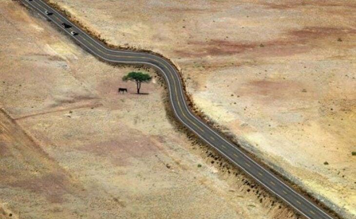 árbol a un costado de una carretera; 12 Pruebas de que la naturaleza puede ser la mejor amiga de la arquitectura