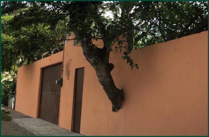 árbol atravesando la pared de una casa; 12 Pruebas de que la naturaleza puede ser la mejor amiga de la arquitectura