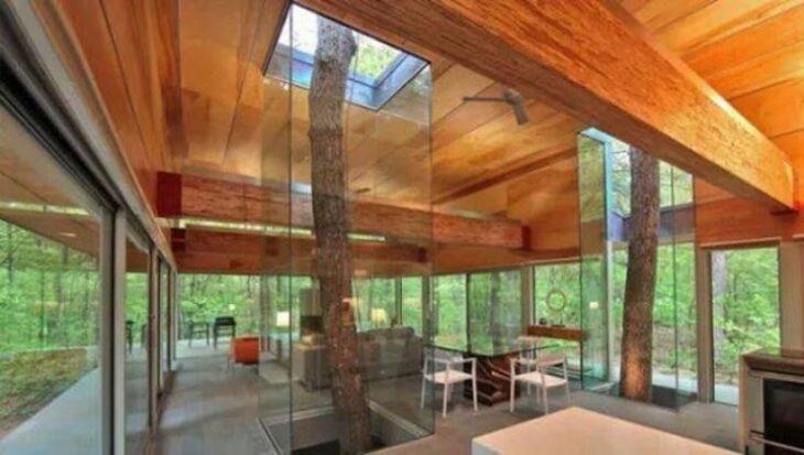 árbol dentro de una caja de cristal; 12 Pruebas de que la naturaleza puede ser la mejor amiga de la arquitectura