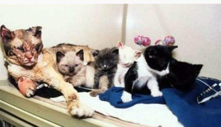 Gatitos dentro de una canasta viviendo con su mamá