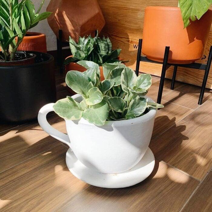 Maceta grande en forma de taza de té, con su plato