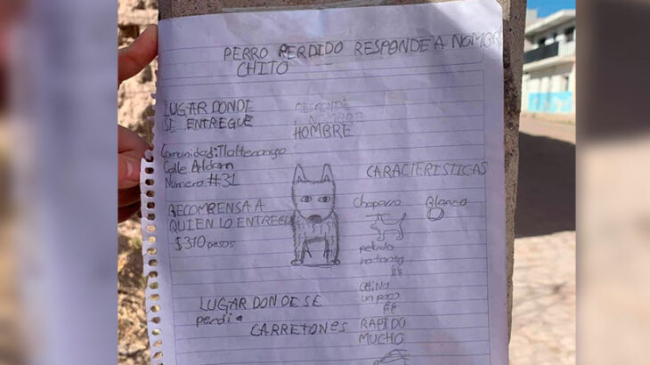 Cartel de búsqueda hecho a mano por un menor;  Niño busca a su perro con dibujo porque no tiene fotos de él