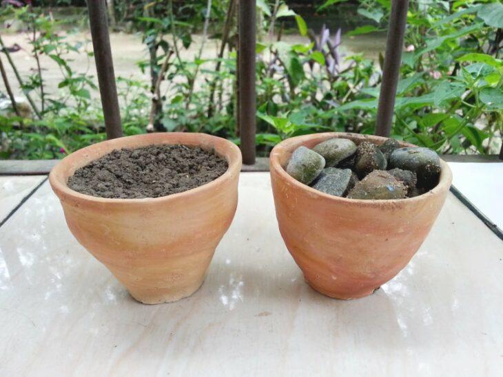 Paso 2 para crear un mini jardín en una taza de té