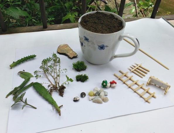 Paso 5 para crear un mini jardín en una taza de té