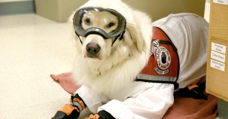 Perrito recostado llevando traje anti-covids para estar junto a su dueño