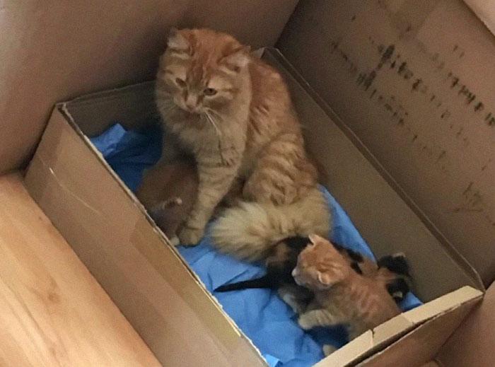 Gatita en una caja acompañando a sus gatitos