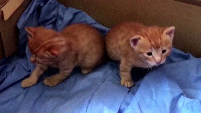 Gatitos dentro de una caja
