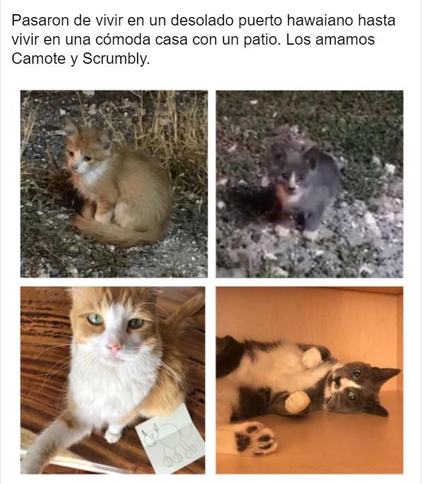 Gatito antes y después de ser rescatado ahora sano y gordito