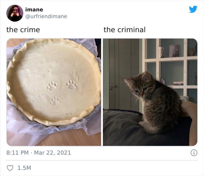 Publicación en twitter de gatitos atrapados destruyendo cosas