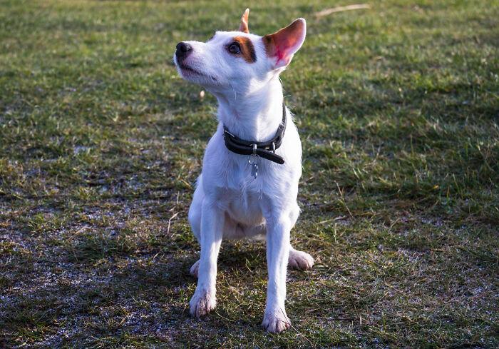 Perro en un jardín; Su mamá lo hizo decidir entre ella o el perro, y él eligió a su perro