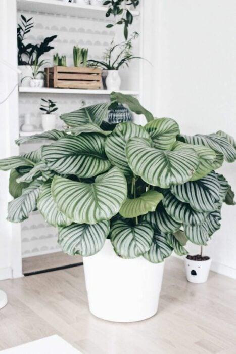 Planta grande dentro de una maceta blanca ;13 Ideas para decorar tu depa con tantas plantas como desees
