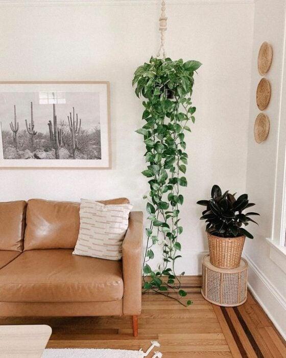 Planta colgante en la sala ;13 Ideas para decorar tu depa con tantas plantas como desees