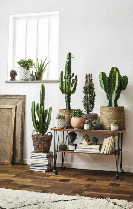cactus sobre una escalera de adorno;13 Ideas para decorar tu depa con tantas plantas como desees