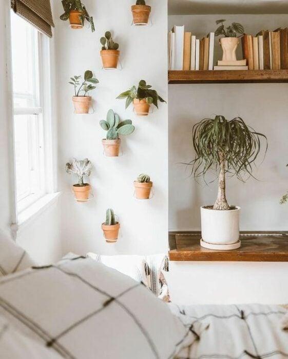 plantas decorativas en una pared ;13 Ideas para decorar tu depa con tantas plantas como desees