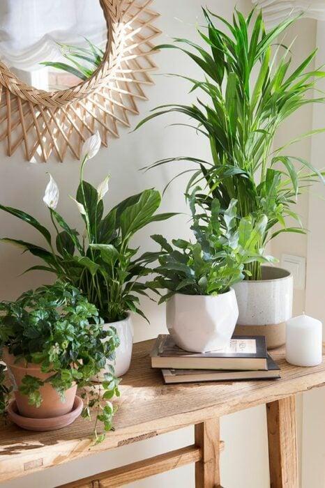 Plantas decorativas en una mesa de estar ;13 Ideas para decorar tu depa con tantas plantas como desees
