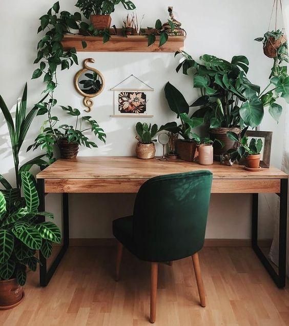 plantas decorativas en un estudio ;13 Ideas para decorar tu depa con tantas plantas como desees