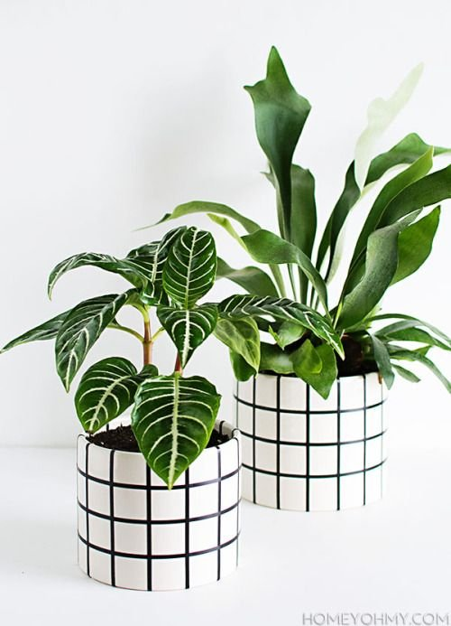 Macetas de lata con líneas negras ;14 Macetas aesthetic para que tus plantas se ven bien chulas
