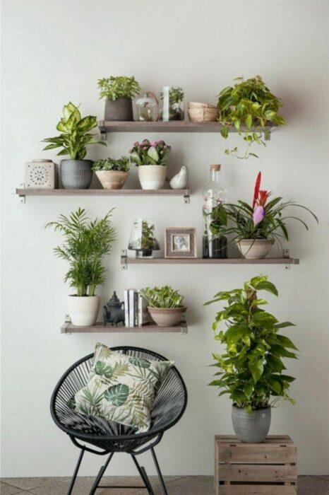 Plantas decorando un espacio en la casa