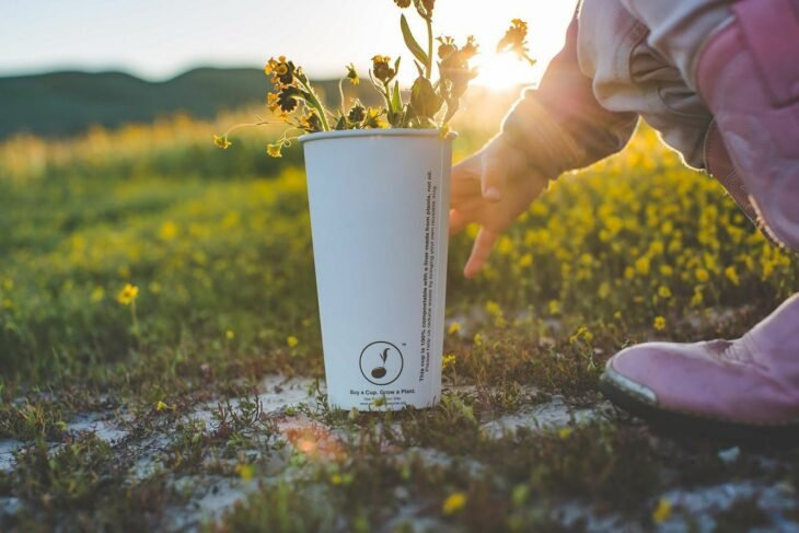 Vaso biodegradable que funciona para plantar árboles o plantas
